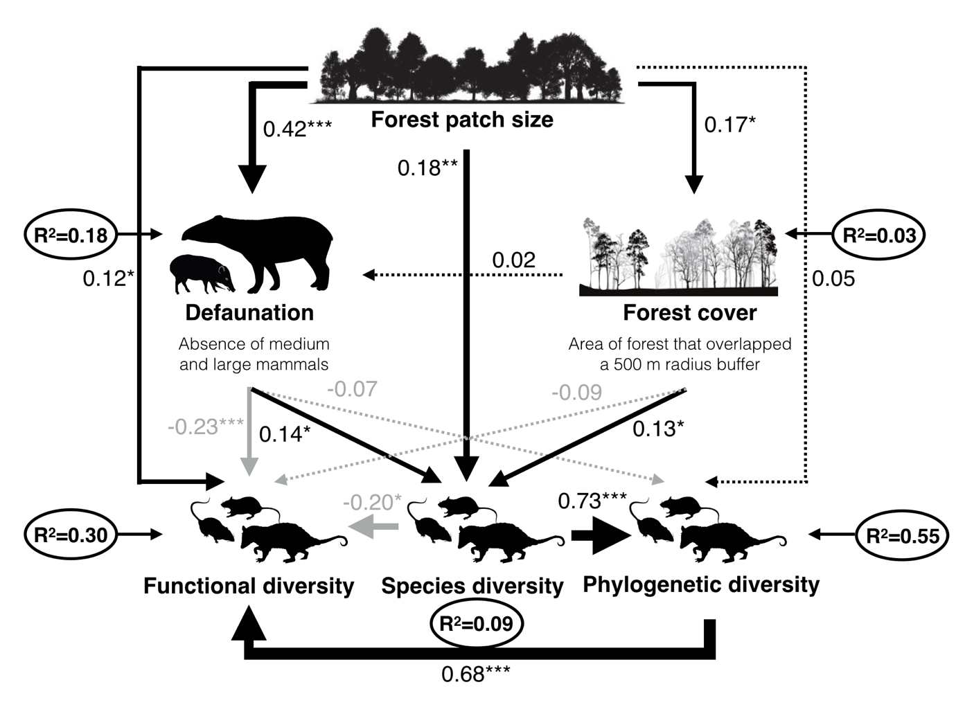 Defaunation and fragmentation erode small mammal diversity