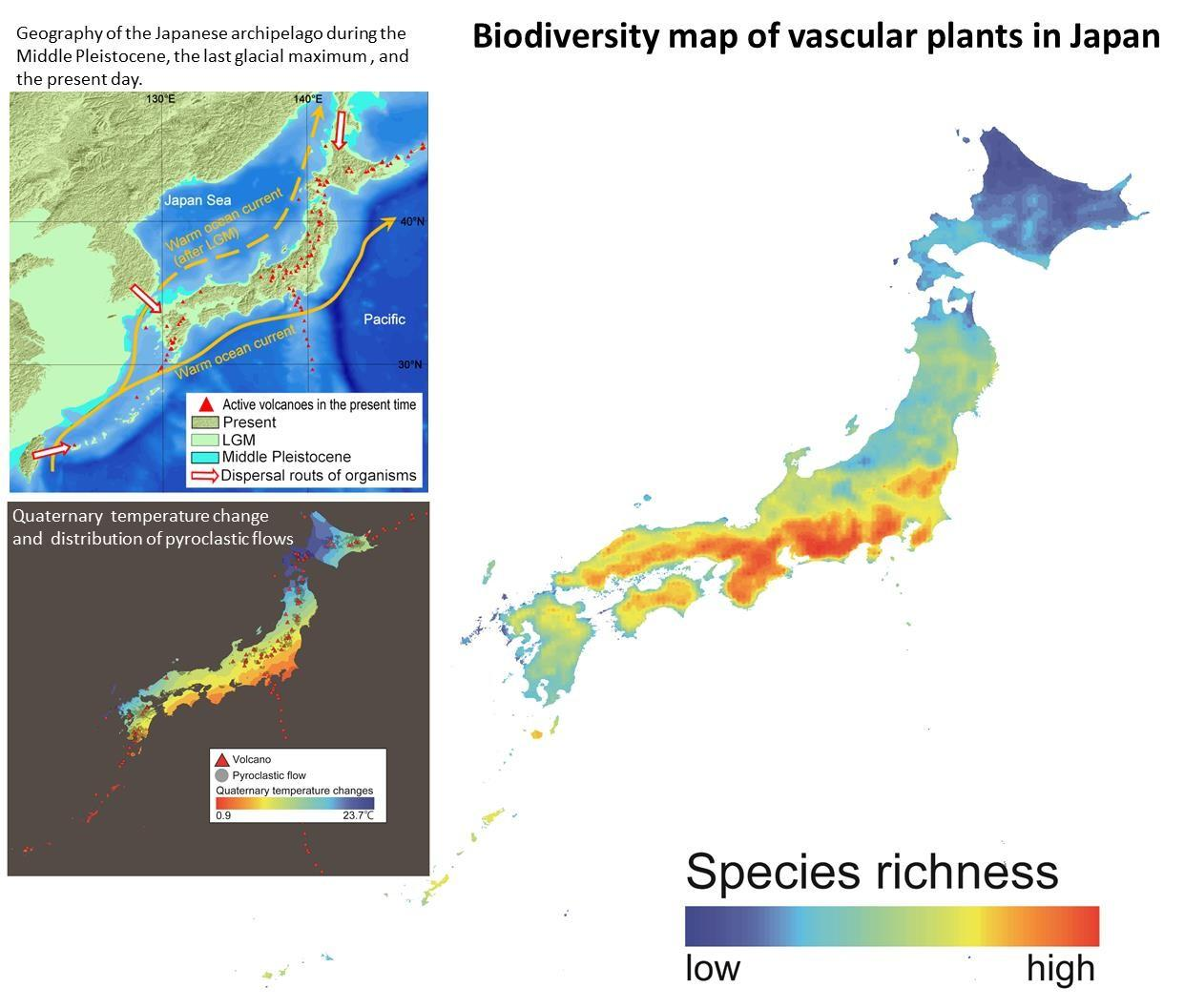 what drives plant richness and endemicity in east asian islands