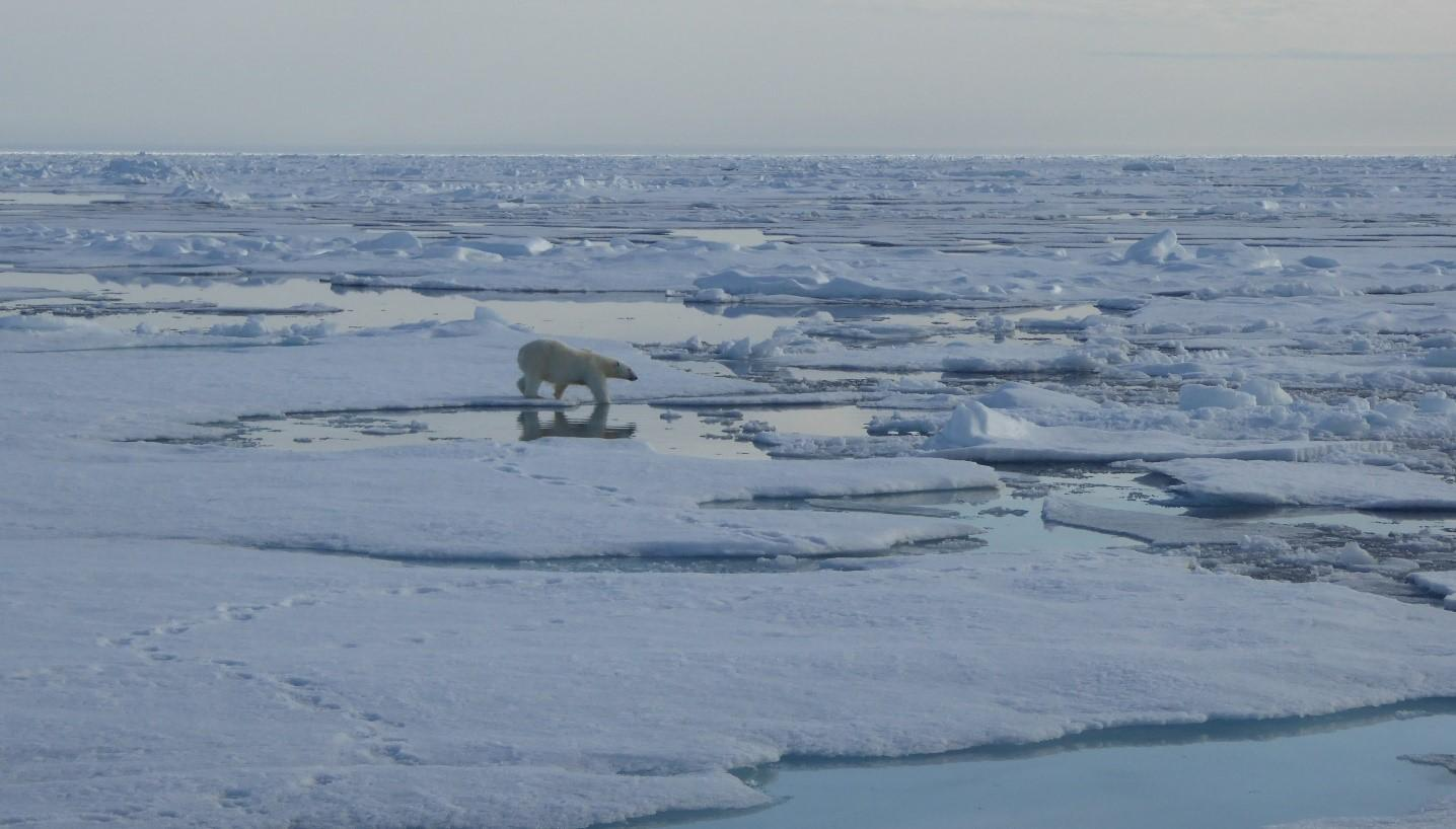HOW THE HABITAT OF POLAR BEARS IS CHANGING
